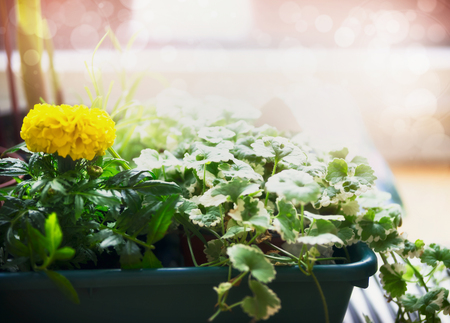 Pretty plant and flowers seedling in container in backlight, close up