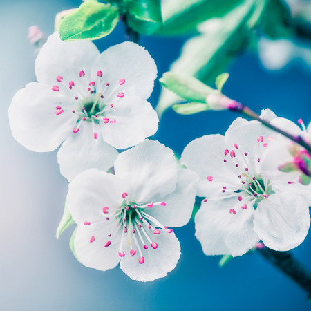 Close up of pretty blossom at blue background Stock Photo