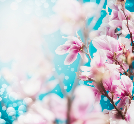 Pretty pink blossom of magnolia tree at blue sky background, close up