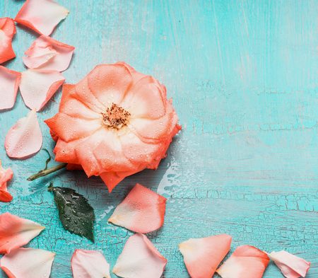 blue petals: Lovely floral background with flowers and petals on turquoise blue background, top view