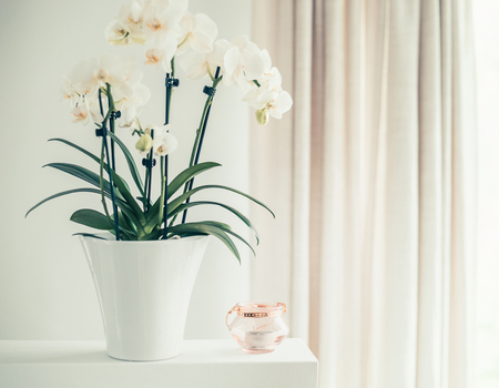 White orchid plant with flowers in pot on window still, front view. Houseplants decoration and home interior