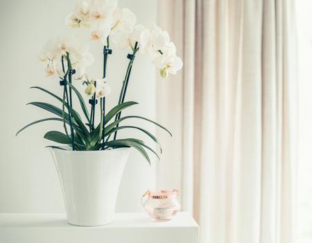 Pianta bianca dell'orchidea con i fiori in vaso ancora sulla finestra, vista frontale. Decorazione di houseplants e interni di casa Archivio Fotografico - 78227326