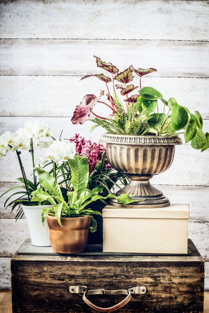 Indoor plants patio pots ideas on vintage suitcase at wooden background, front view Stock Photo