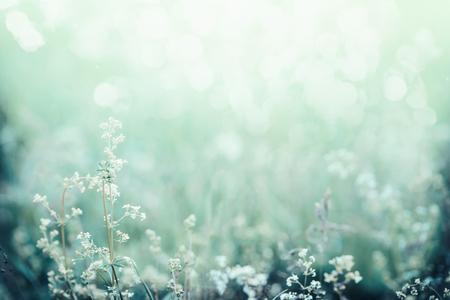 잔디와 꽃 필드에 아침 햇빛입니다. 아름다운 자연 풍경 배경