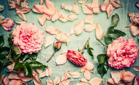 Pink roses arrangements with flowers petal and leaves on turquoise  shabby chic background, top view
