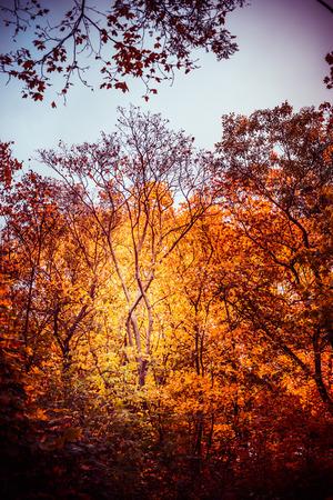 Het de herfstpark of bos met mooi gebladerte, valt openluchtaardachtergrond