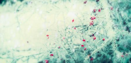 冬の日で霜や雪で覆われた赤い冷凍ベリーの木の枝と美しい冬、自然の背景 写真素材 - 80446774