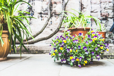 Beautiful  patio with flowerpots and flowers, container planting and gardening, outdoor Banco de Imagens