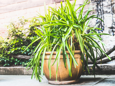 Pretty terracotta Patio pot with green plants,  container planting and gardening, outdoor