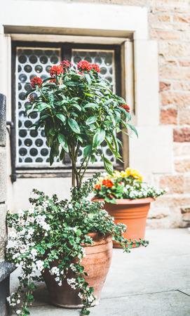 Patio bloemen potten met verschillende planten en bloemen, container planten en tuinieren, buiten Stockfoto