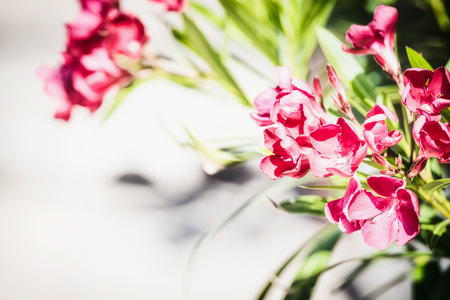 Pretty red  blooming on light background, front view