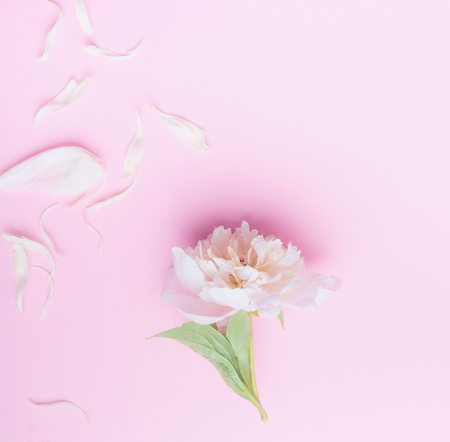 Pastel pink floral background with white peony flowers and petals pastel pink floral background with white peony flowers and petals top view flat lay mightylinksfo