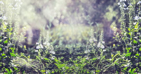 Summer nature background with wild plant and flowers, banner Stock Photo