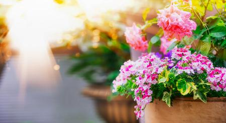Mooie patio bloempotten op balkon in zonlicht Stockfoto