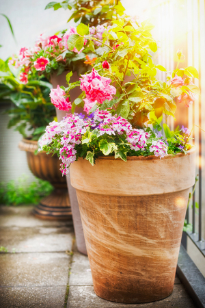 Pretty patio or balcony pot with container flowers: roses and verbena in Sunlight, container planting and gardening concept. Urban garden. Stock Photo