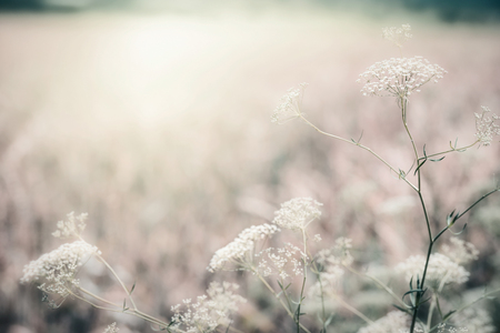 아침 햇빛, 야외 자연 배경, 음소거 된 색상의 야생 허브 스톡 콘텐츠 - 81856962