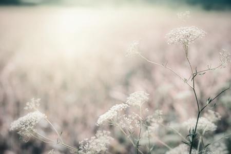 Wilde kruiden bij ochtendzonlicht, openluchtaardachtergrond, gedempte kleuren
