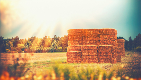 Rural late summer country landscape with wheat haystack or straw bales on field, agriculture farm and farming Stock Photo