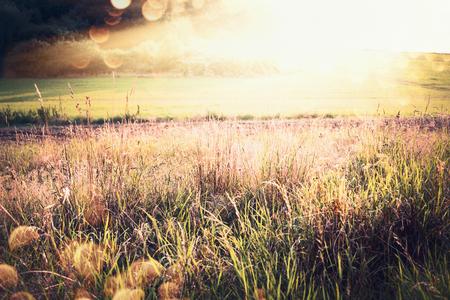 Schöne Herbst- oder Spätsommerlandlandschaft mit Gras, Feld und Sonnenstrahlen, Naturhintergrund im Freien Standard-Bild - 81856969
