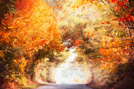 Beautiful autumn alley landscape with colorful fall foliage of trees and sunlight, fall outdoor nature in park or country Stock Photo