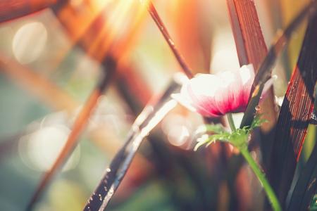 De herfstaard met grassen en bloemen in zonlicht, sluit omhoog, openluchtaardachtergrond