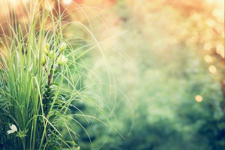 팜파스 잔디와 햇빛과 bokeh 자연 배경에서 녹색 릴리와 함께 아름 다운 정원. 여름 정원