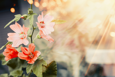Pretty flowers in sunset light and bokeh, outdoor nature