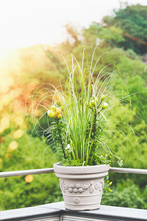 Beautiful patio flowers pot with pampas grass and green lily on balcony or terrace in sunset light. Urban container gardening, flowers patio pot ideas Stock Photo