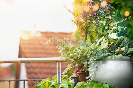 Flower Planter on balcony or terrace in sunset light. Urban container gardening, flowers patio pot ideas