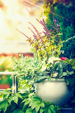 Beautiful patio flowers pot on balcony or terrace in sunset light. Urban container gardening, flowers planter ideas