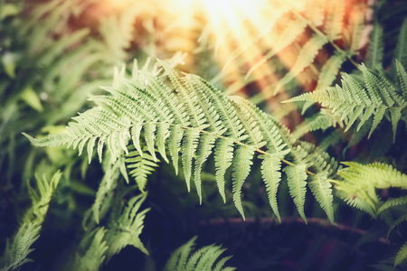 Tropical Fern leaves with sunbeam,  nature background Stok Fotoğraf