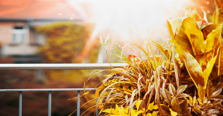 Autumn Balcony and terrace plant with sunbeam at city background