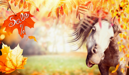 Funny horse face with autumn foliage, falling leaves and text Sale, banner Stock Photo