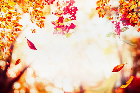 Autumn background with falling leaves at landscape trees at sunlight with bokeh, frame
