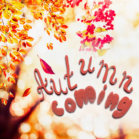 Autumn background with falling leaves at landscape trees at sunlight with text Autumn coming Stock Photo