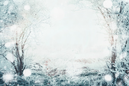 Winter day landscape with frozen tress and snow, outdoor nature background, frame Zdjęcie Seryjne