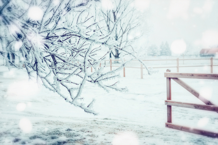 Winter day country landscape with frozen tress , snow and wooden fence, outdoor nature background Stock fotó