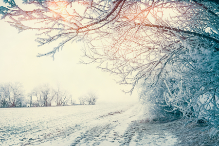 Beautiful winter country landscape with snowy trees and field at sunlight, outdoor nature
