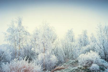 Prachtig de winterlandschap met sneeuwbomen en grassen bij hemelachtergrond