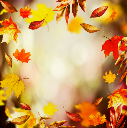 Autumn background with Beautiful falling leaves and bokeh, fall nature in garden or park, frame
