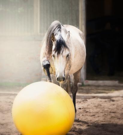 Caballo gris jugar gran bola amarilla en paddock Foto de archivo - 83864864