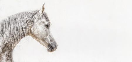 明るい背景、プロフィール画像、バナーをグレー アラビアの馬の頭の肖像画