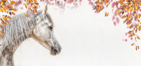 Portrait of gray arabian horse head on light background with autumn leaves and foliage, Profile Pictures, banner