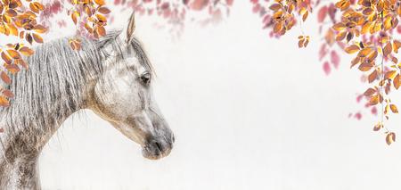 Portret van grijs Arabisch paardhoofd op lichte achtergrond met de herfstbladeren en gebladerte, Profielbeelden, banner Stockfoto