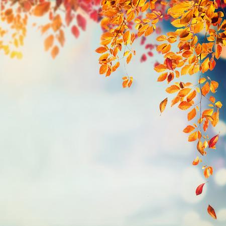 brunches와 떨어지는 나무와 단풍 배경 bokeh, 사각형 하늘에 나뭇잎