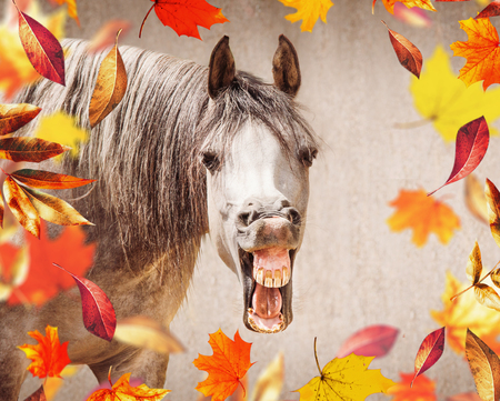 Funny horse face with Open mouthed looking in camera , in the foreground falling autumn leaves Stock Photo