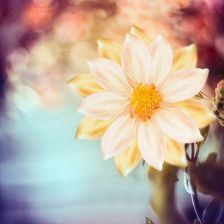 Beautiful flowers at nature bokeh background
