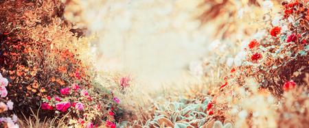 Mooie de herfstachtergrond van zonnige dag met diverse tuin of parkbloemen en dalingsgebladerte, banner