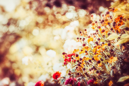 Beautiful autumn flowers garden  background, fall outdoor nature Stock Photo - 85704764