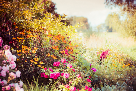 Autumn garden background with various fall flowers
